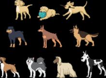 les chiens les plus chers