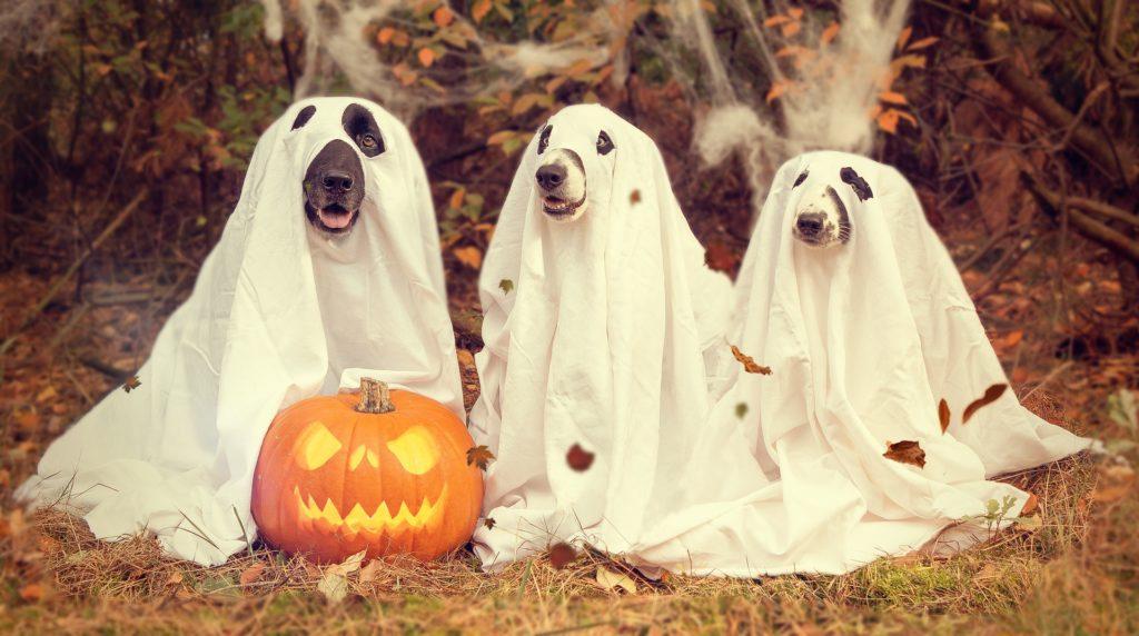 halloween est chien