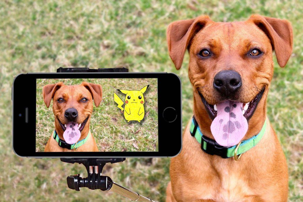 Humour et jeu des chiens