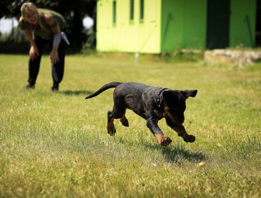 chien est un chasseur naturel