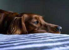 votre chien ne veut pas sortir ! chien ne veut pas marcher