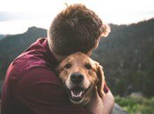 la vie des chiens est très courte