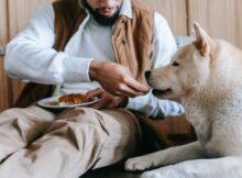 chien ne mange pas